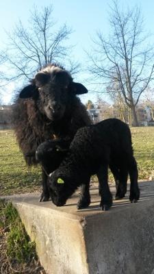 Nönneli mit ihren Jungen : )