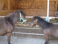 Zafira und Ronny
