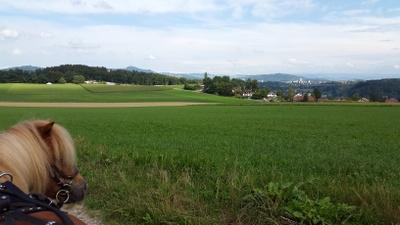 Max auf dem Birchihoger in Bremgarten: Super Panorama: )