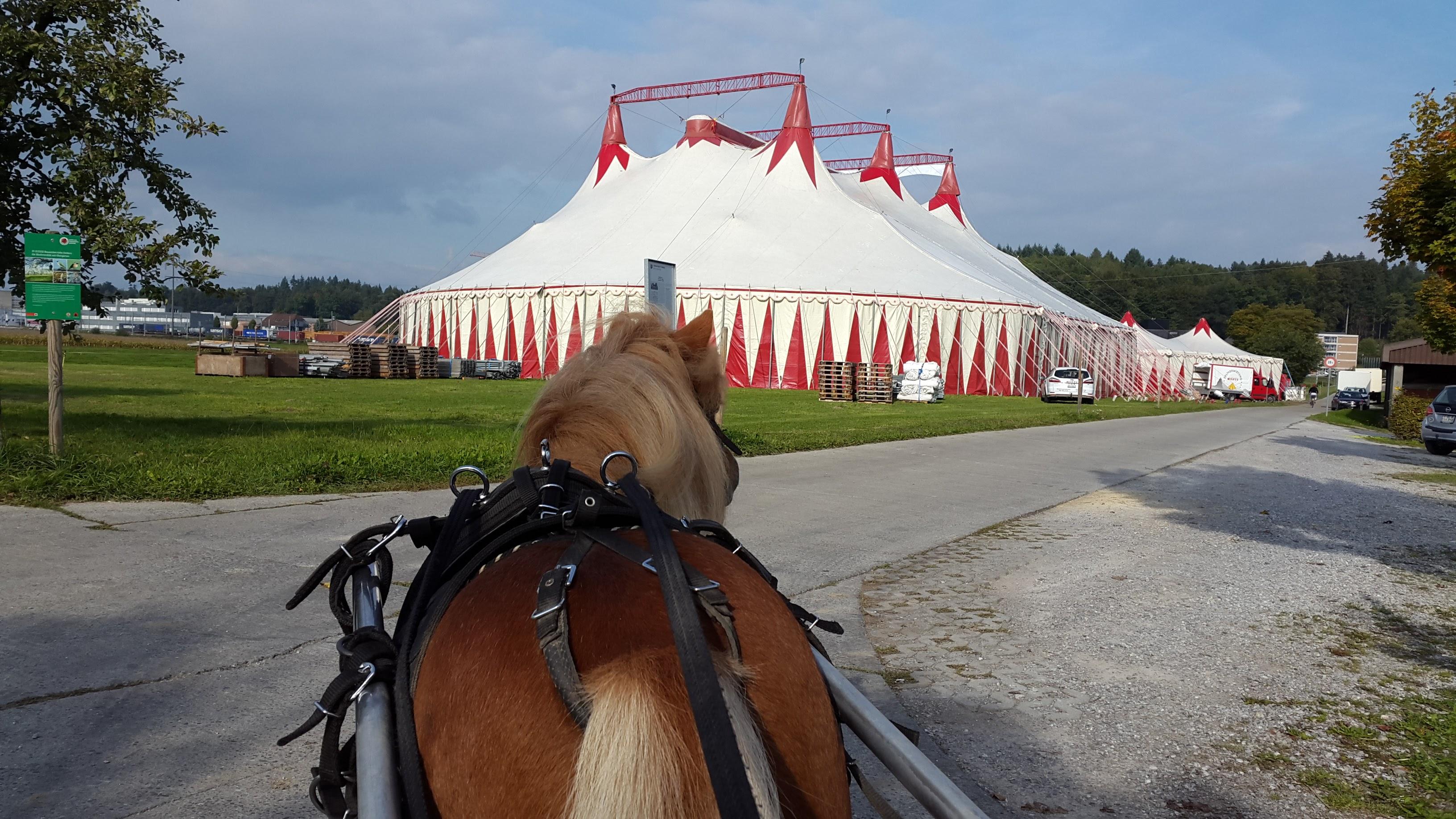 """Max vor dem Zirkus """"Monti"""""""
