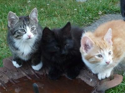 Minkas letzter Wurf: (von Links nach Rechts) Lollita, Naboo(sprich Nabuu) und Kasimir.