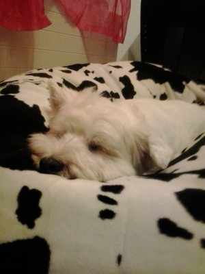 Olivia schläft tief und fest.