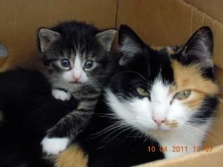 Minka mit ihren jungen Katzen