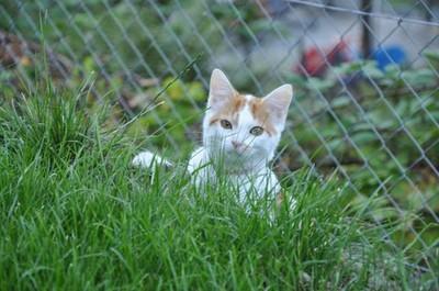 Ilvy im Garten : D