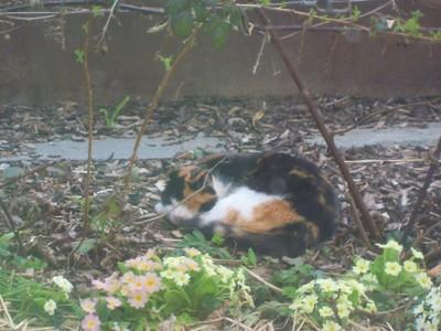Minka friedlich an einem ihrer Lieblingsplätze... Unter den Brombeeren
