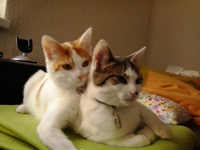 Momo und Ilvy