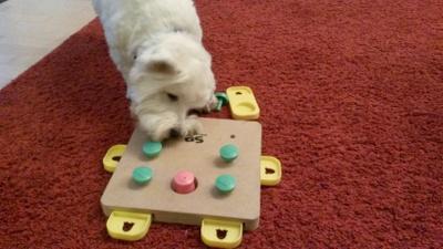 Olivia beim lösen einer Hundespielkiste